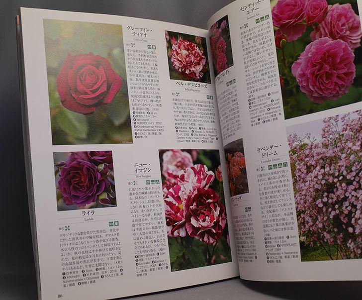 NHK趣味の園芸-花をいっぱい咲かせるテクニック-人気のバラ-シュラブローズを買った2.jpg