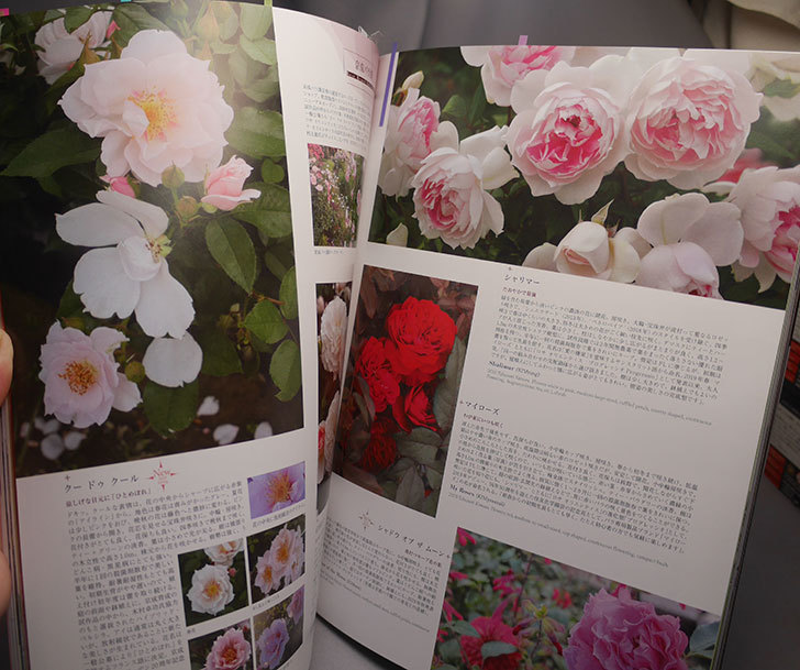 New Roses 2020 Vol.27 ローズブランドコレクションを買った005.jpg